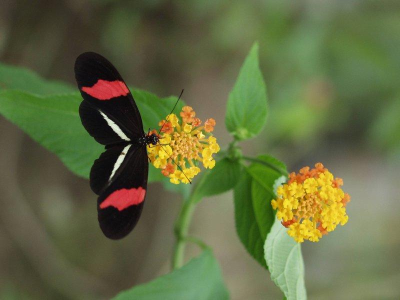 Nayara Resort Spa and Gardens-Butterfly farm<br/>Image from Leonardo