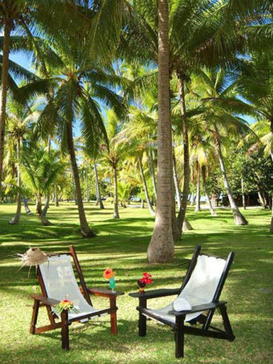 Vahine Island-A magnificent coconut grove<br/>Image from Leonardo