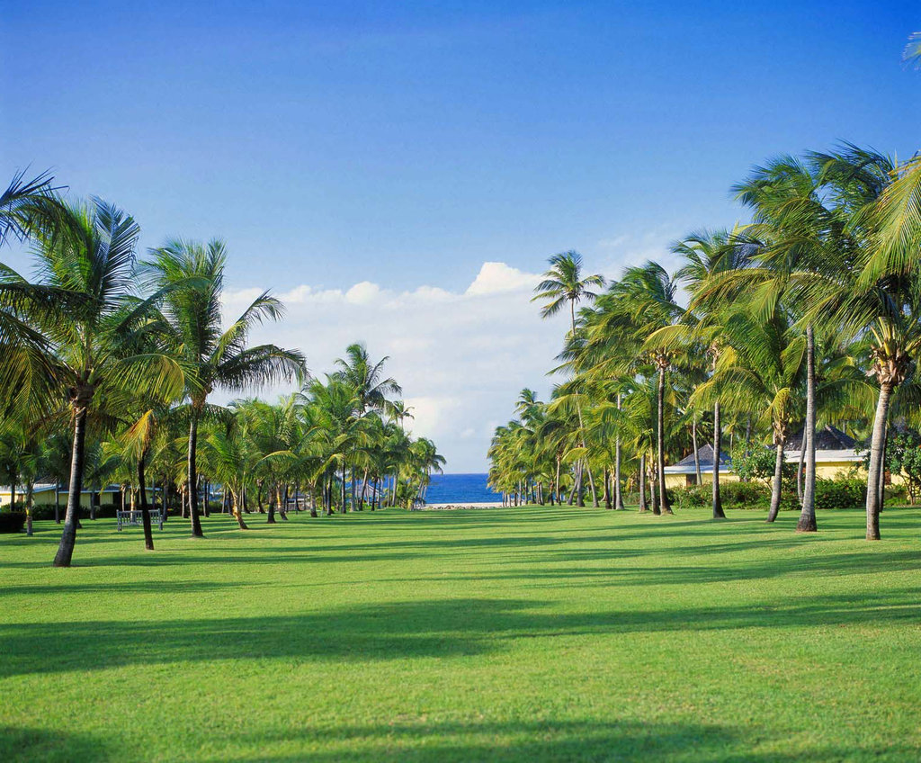 Nisbet Plantation-Avenue of The Palms; looking down to the beach<br/>Image from Leonardo