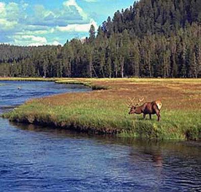 Best Western Desert Inn-Bull Elk<br/>Image from Leonardo