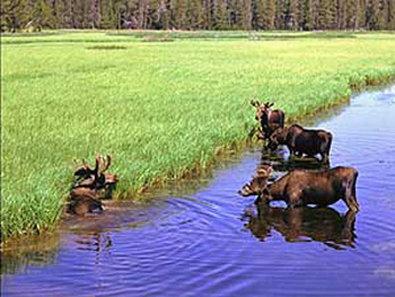 Best Western Desert Inn-Buck Moose<br/>Image from Leonardo