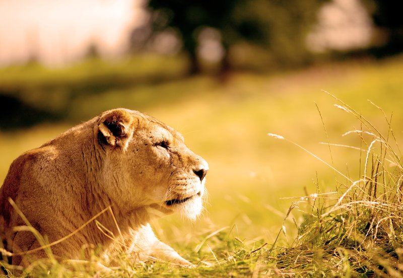 DoubleTree by Hilton Milton Keynes-Woburn Safari Park<br/>Image from Leonardo