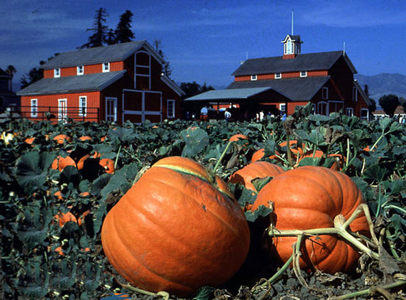 Hilton Garden Inn Riverhead-Pumpkin Picking<br/>Image from Leonardo