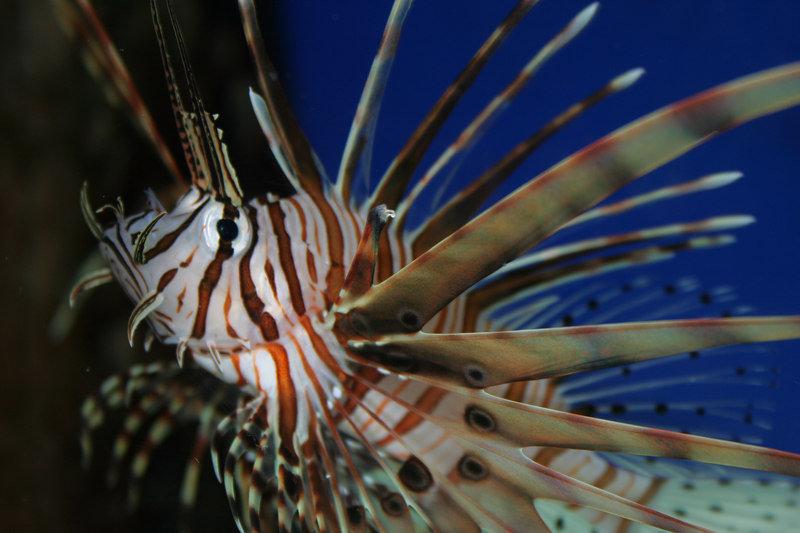 Hilton Garden Inn Riverhead-Atlantis Marine World Aquarium<br/>Image from Leonardo