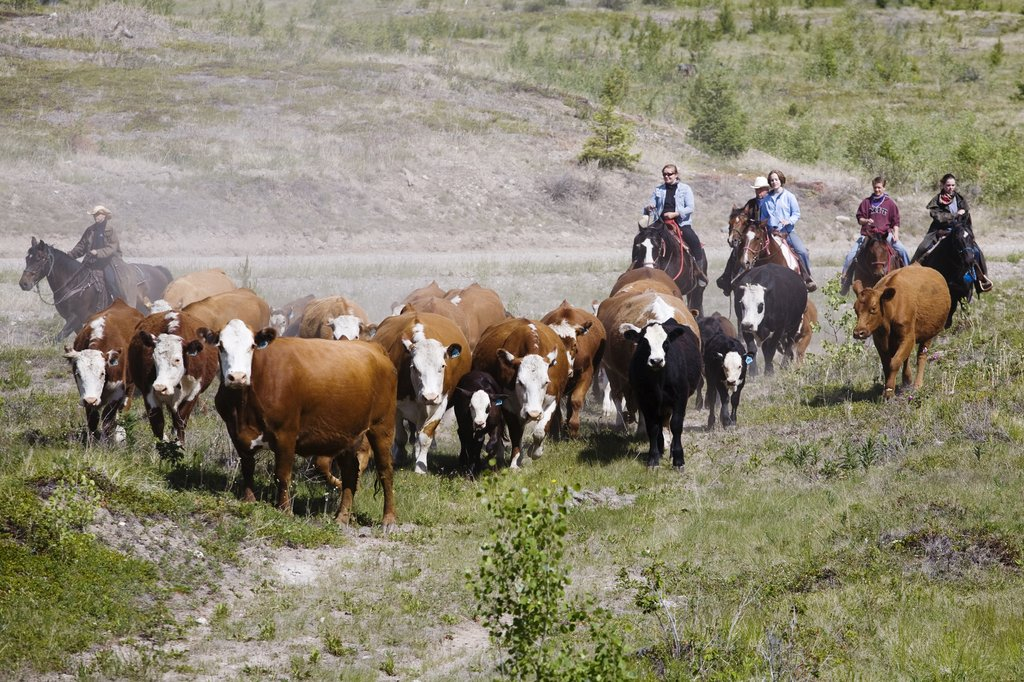 Echo Valley Ranch & Spa-Cattle Drive<br/>Image from Leonardo