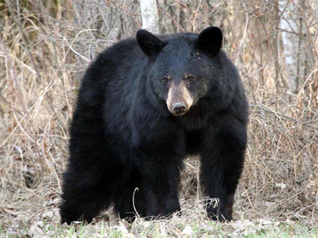 Echo Valley Ranch & Spa-Black Bear<br/>Image from Leonardo
