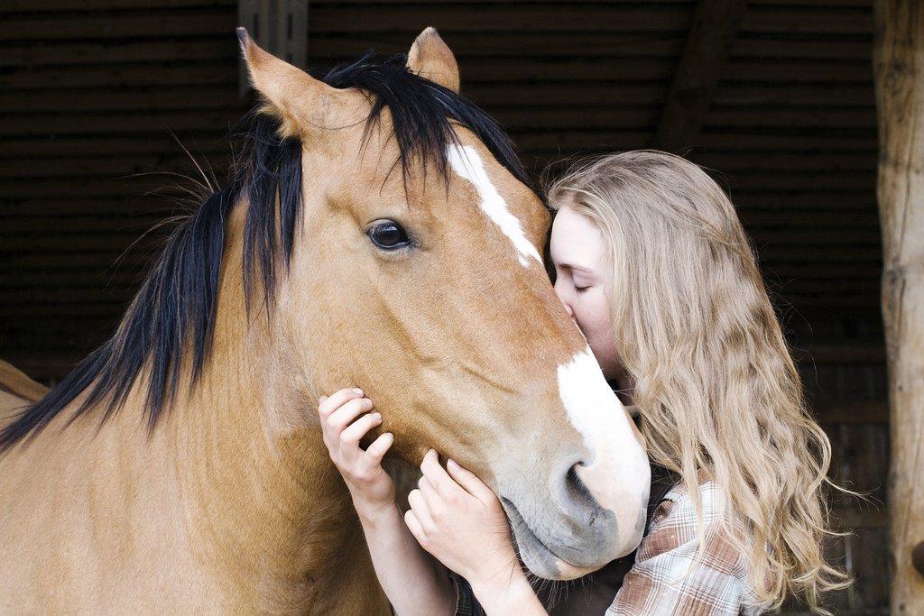 Echo Valley Ranch & Spa-EVSpiritual Horse<br/>Image from Leonardo