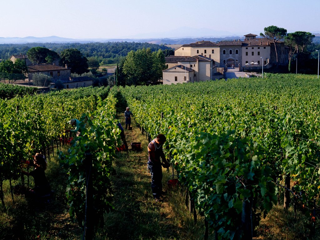 Castel Monastero-View From Vineyards<br/>Image from Leonardo