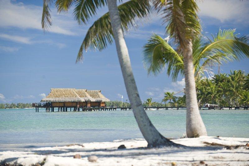 Vahine Island-Pilotis Cocotiers Paysage<br/>Image from Leonardo