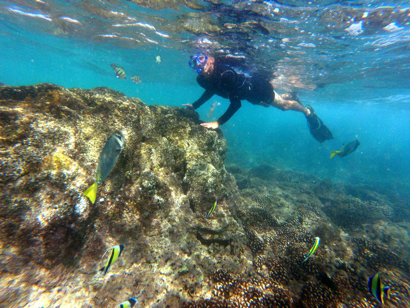 Grand Fiesta Americana Los Cabos All Inclusive - Snorkel <br/>Image from Leonardo