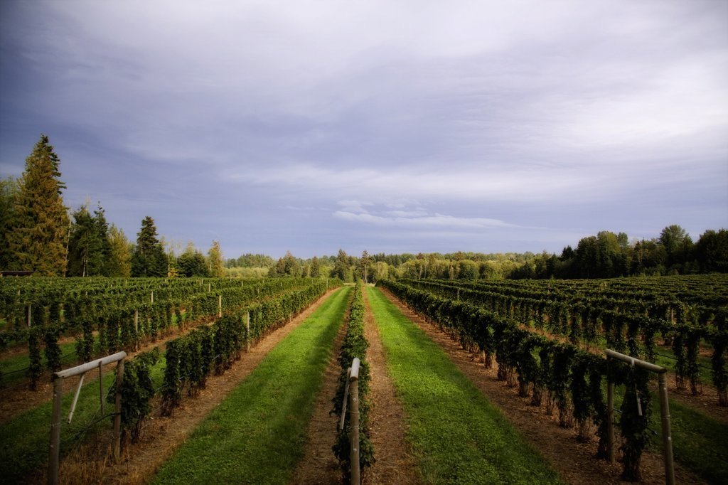 Holiday Inn Express & Suites Courtenay Comox Valley SW-Coastal Black Vineyard<br/>Image from Leonardo
