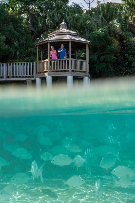 Grotto Bay Resort-Pergola Underwater<br/>Image from Leonardo