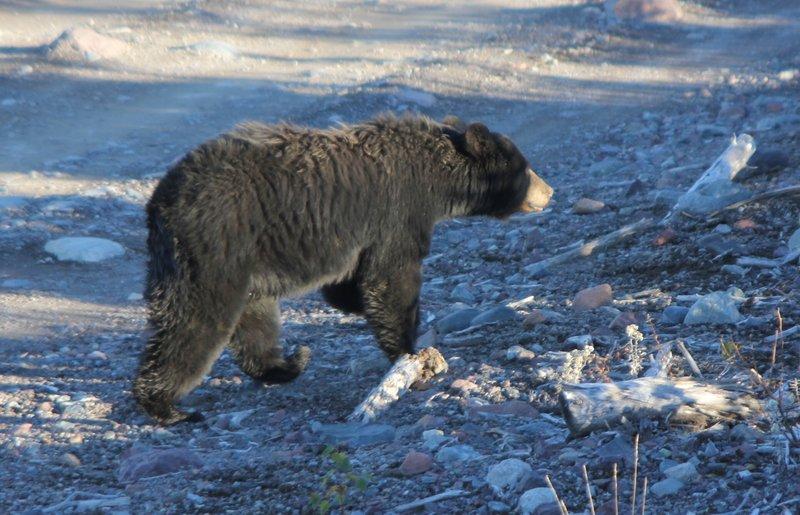 Holiday Inn Express Deer Lake-Black Bear - Credit to NL Tourism<br/>Image from Leonardo