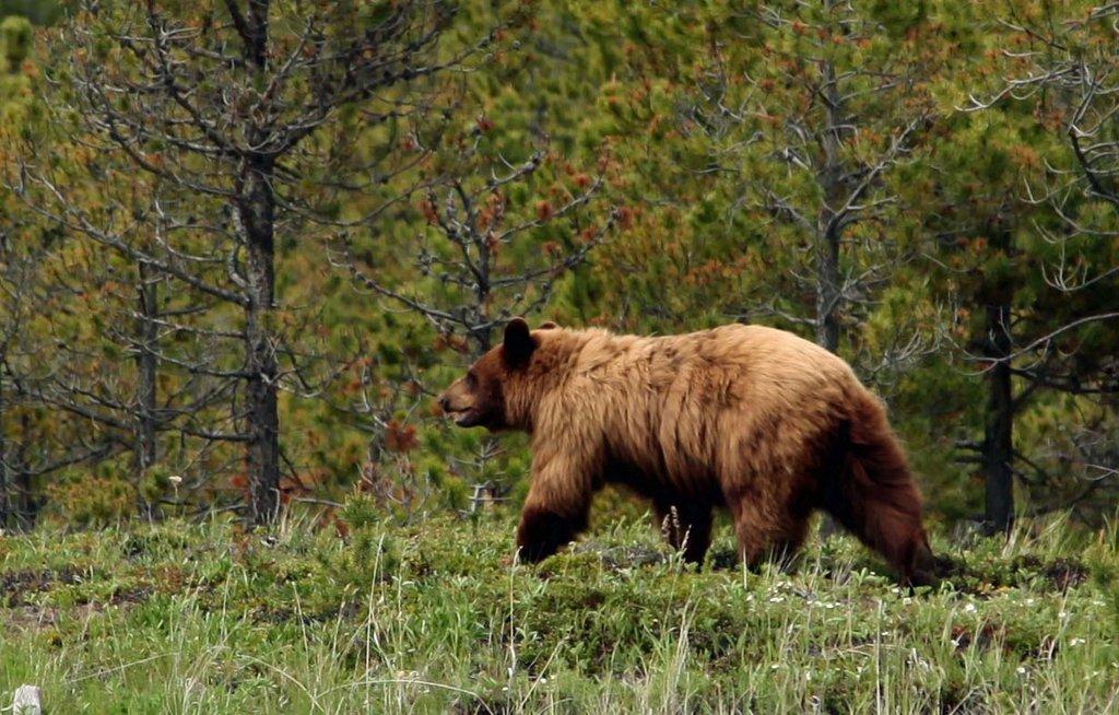Echo Valley Ranch & Spa-Black Bear at Echo Valley Ranch<br/>Image from Leonardo