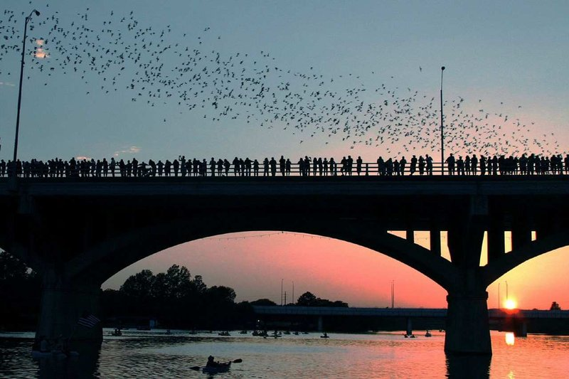 DoubleTree by Hilton Austin-Congress Bats<br/>Image from Leonardo