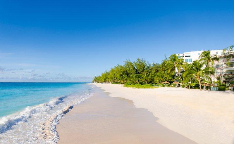 Bougainvillea Barbados-Maxwell Beach<br/>Image from Leonardo