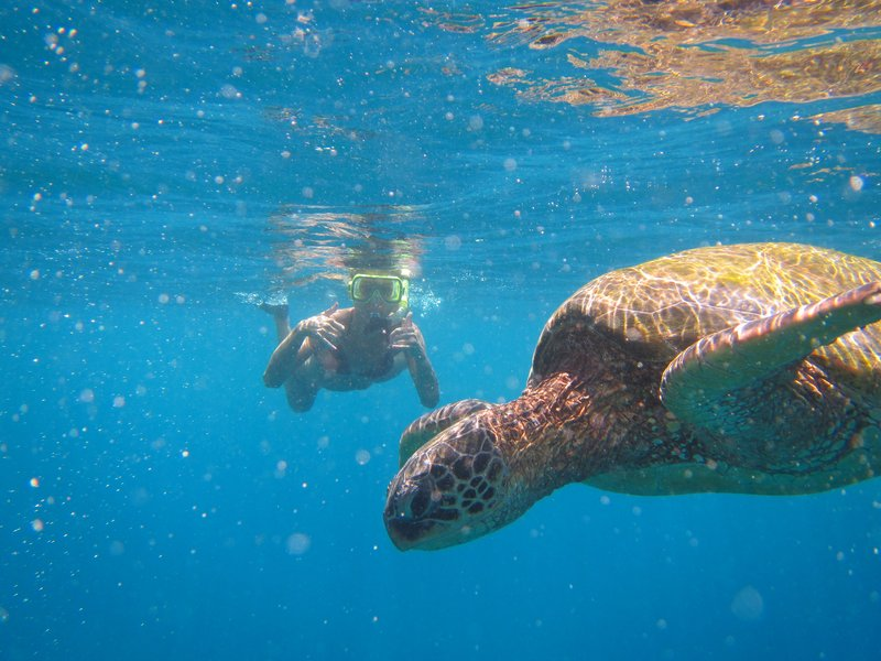 Hyatt Regency Maui Resort - Hyatt Regency Maui Snorkel <br/>Image from Leonardo