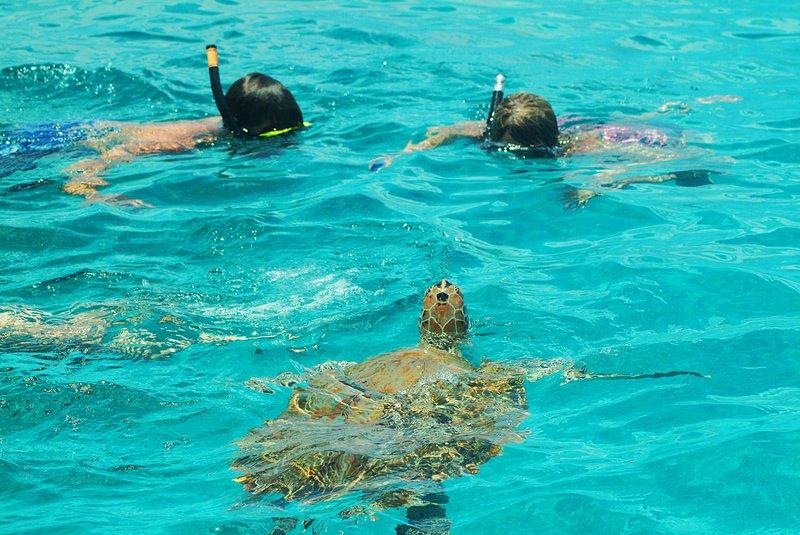Bougainvillea Barbados-Stay & Dive<br/>Image from Leonardo