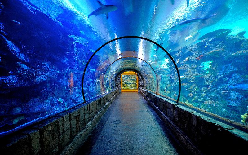Mandalay Bay Resort and Casino-Shark Reef<br/>Image from Leonardo