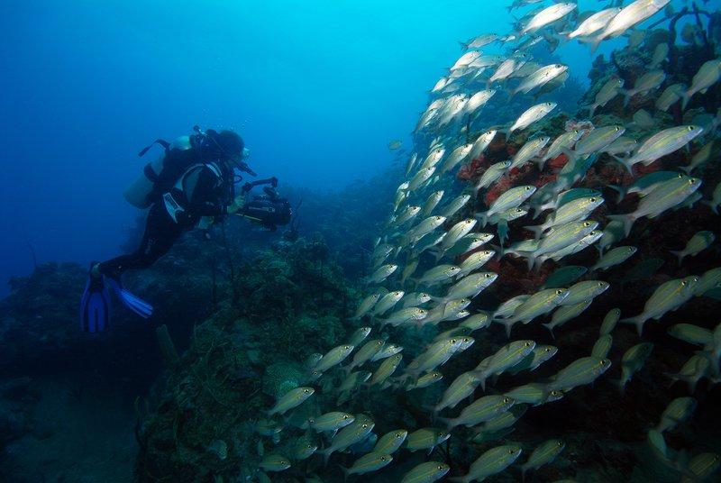 Ocean Club, A Four Seasons Resort, Bahamas-Diving<br/>Image from Leonardo