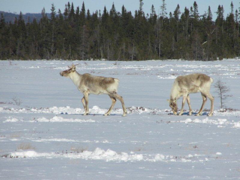 Holiday Inn Express Deer Lake-Caribou - Credit of NL Tourism<br/>Image from Leonardo
