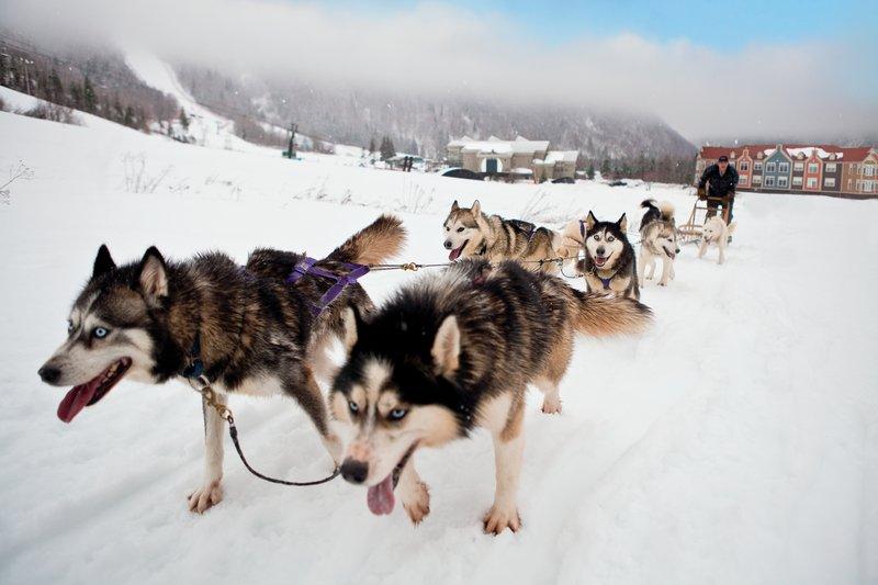 Holiday Inn Express Deer Lake-Dog Sledding - Credit to NL Tourism<br/>Image from Leonardo