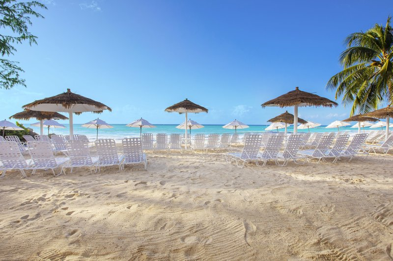 Bougainvillea Barbados-Bougainvillea Barbados - Beach<br/>Image from Leonardo