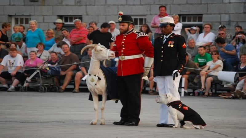Holiday Inn Express & Suites Kingston-Visit Fort Henry and David the Goat!<br/>Image from Leonardo
