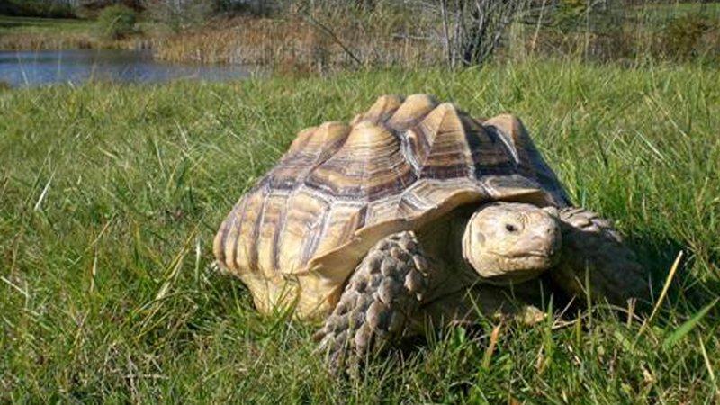 Holiday Inn Elmira - Riverview-Tanglewood Nature Center Museum, Live Animals<br/>Image from Leonardo