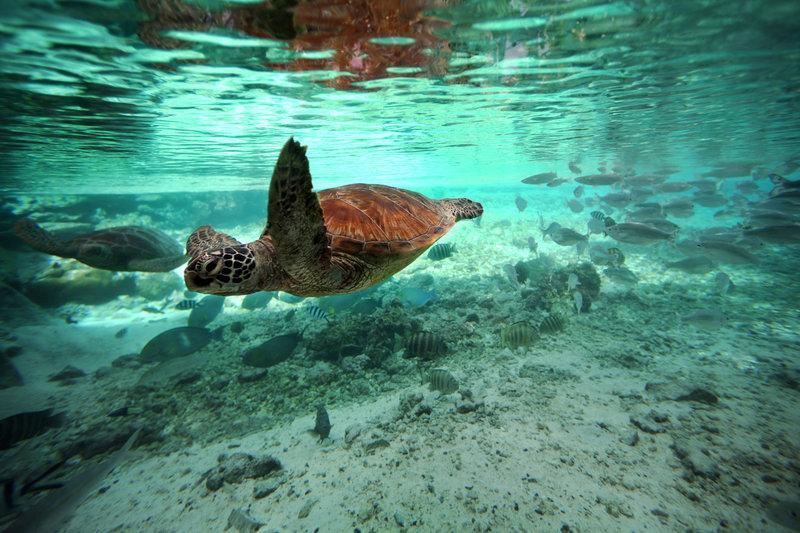 Le Meridien Bora Bora - Turtle Sanctuary <br/>Image from Leonardo