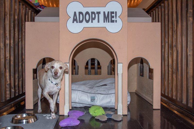Westin Mission Hills Golf Resort-Dog Adoption At The Westin Mission Hills<br/>Image from Leonardo