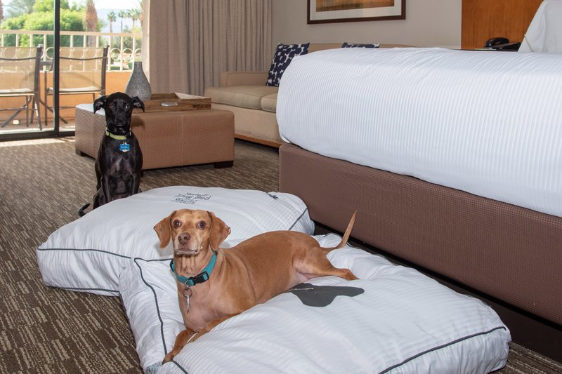 Westin Mission Hills Golf Resort-Dog Bed for your Pet<br/>Image from Leonardo