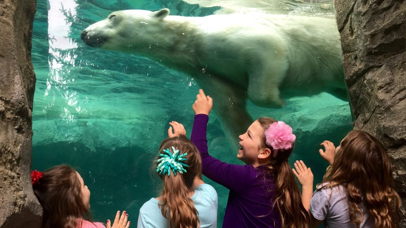 Holiday Inn Hotel & Suites Cincinnati-Eastgate (I-275e)-Enjoy a visit to the Cincinnati Zoo while in town.<br/>Image from Leonardo
