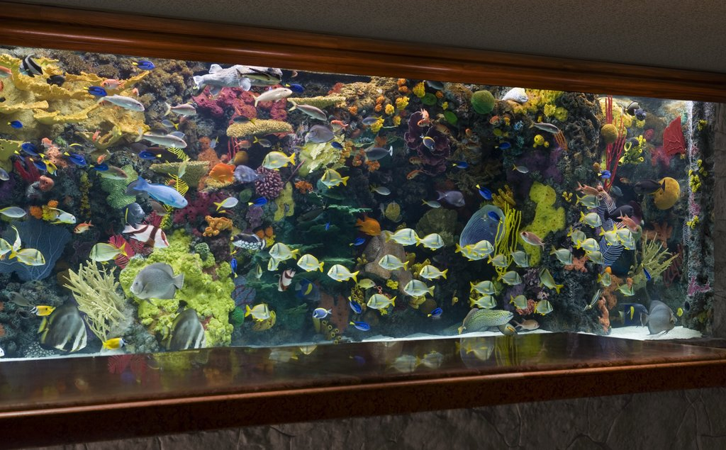 The Mirage Hotel and Casino - Lobby Aquarium <br/>Image from Leonardo