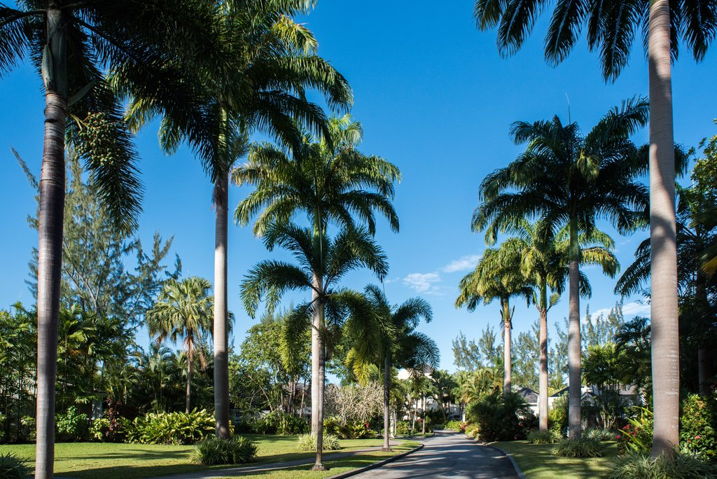 Coral Reef Club-Palm Trees on Driveway<br/>Image from Leonardo