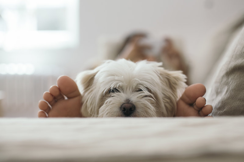 Candlewood Suites Santa Maria-Bring your furry friends along as pets are welcome here!<br/>Image from Leonardo