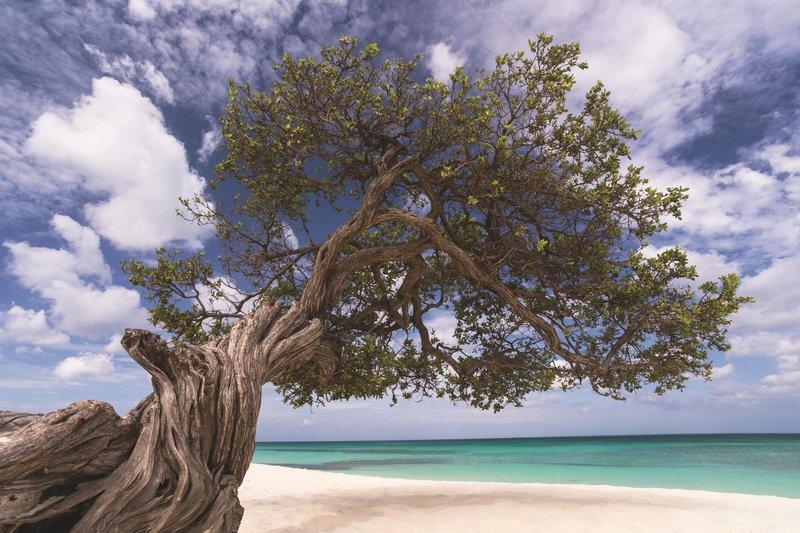 THE RITZ-CARLTON, ARUBA - Divi Divi Tree <br/>Image from Leonardo