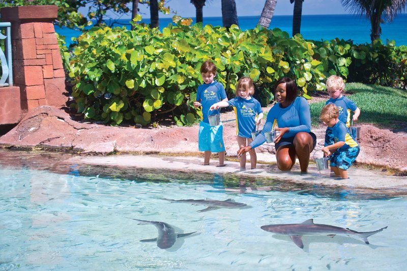 The Coral At Atlantis - Sea Squirts - Kids Program <br/>Image from Leonardo