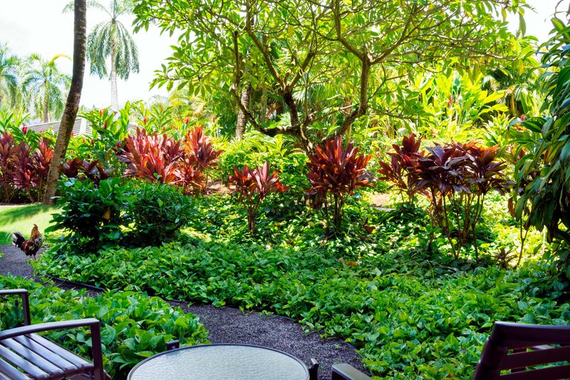 Kauai Marriott Resort-Garden View<br/>Image from Leonardo