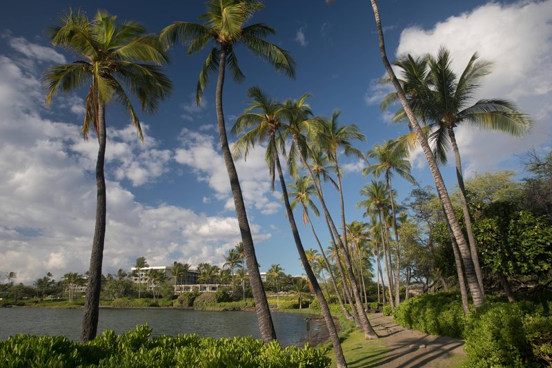 Waikoloa Beach Marriott - Coconut Palm Grove <br/>Image from Leonardo