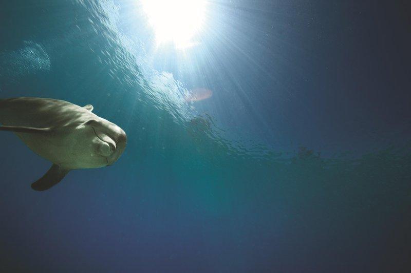 The Royal at Atlantis - Dolphin Cay <br/>Image from Leonardo