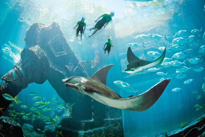 The Royal at Atlantis-The Ruins Lagoon<br/>Image from Leonardo