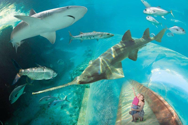 The Royal at Atlantis-Predator Tunnel<br/>Image from Leonardo