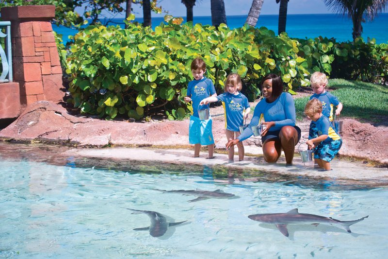 The Royal at Atlantis-Sea Squirts - Kids Program<br/>Image from Leonardo