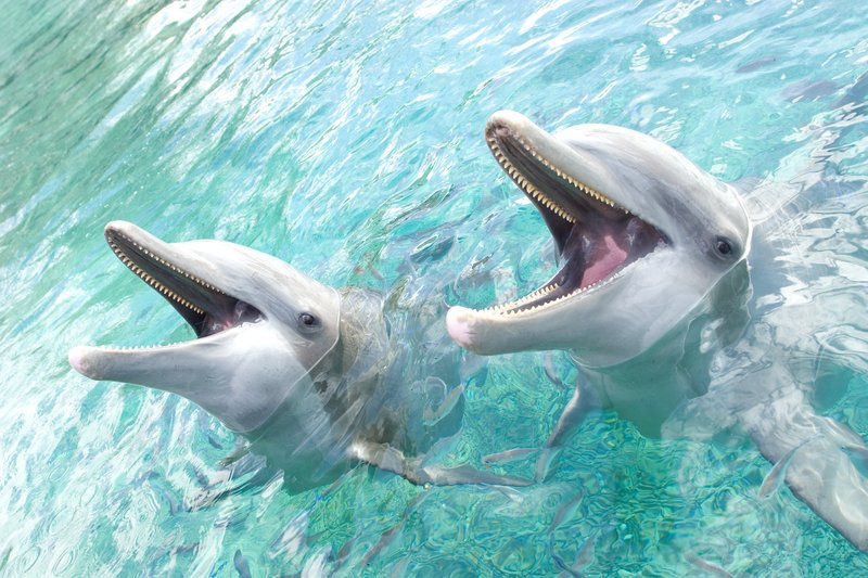 Intercontinental Moorea Resort-Moorea Dolphin Centre<br/>Image from Leonardo