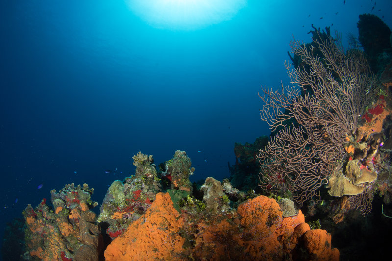 Holiday Inn Resort Grand Cayman-Dive Tech- Grand Cayman- Diving<br/>Image from Leonardo