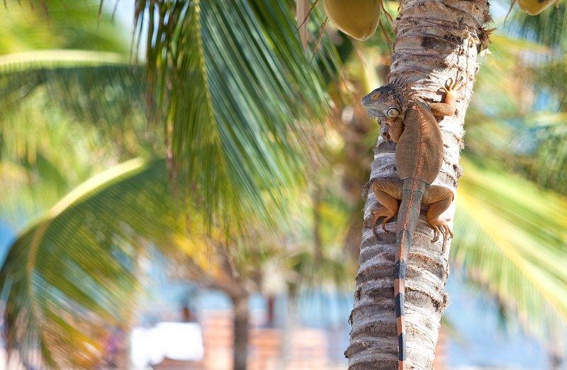 Holiday Inn Resort Grand Cayman-Scenery and Landscape view at the Holiday Inn Resort Grand Cayman<br/>Image from Leonardo