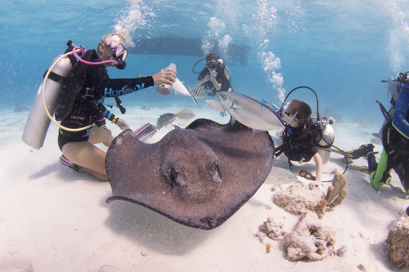 Holiday Inn Resort Grand Cayman-Dive Tech- Grand Cayman<br/>Image from Leonardo