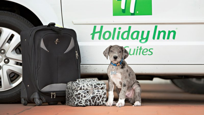Holiday Inn Hotel & Suites Bloomington - Airport-Pet friendly in our first floor guest rooms, $20 fee per night<br/>Image from Leonardo