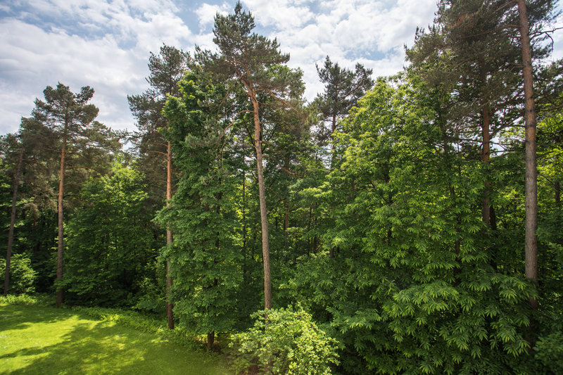 Four Points by Sheraton Ljubljana Mons-Forest View<br/>Image from Leonardo